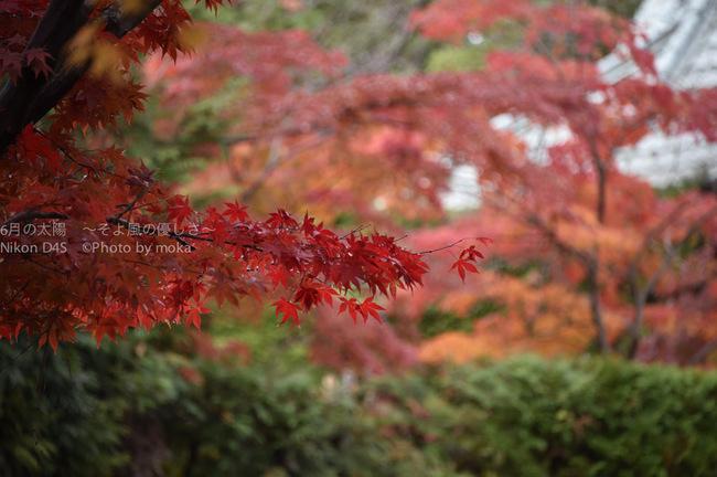20141130_hondoji018.jpg