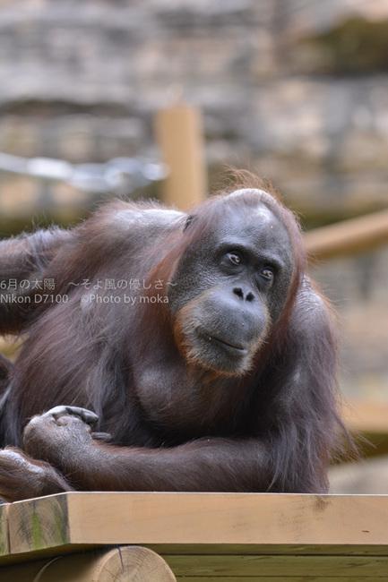20150825_tama-zoo012.jpg
