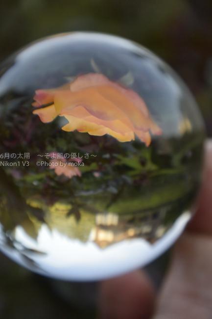 20150928__kyuhurukawatei10.jpg