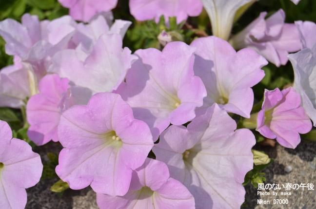 20110430_ashikaga-flower85.jpg