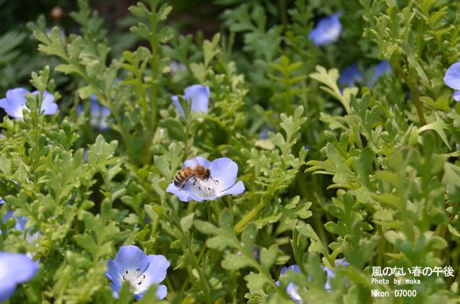 20110430_ashikaga-flower90.jpg