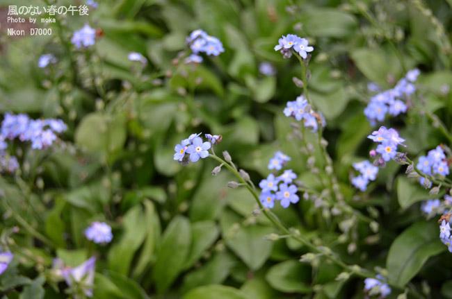 20110514_jindaiji100.jpg