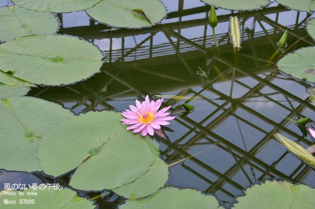 20110514_jindaiji63.jpg