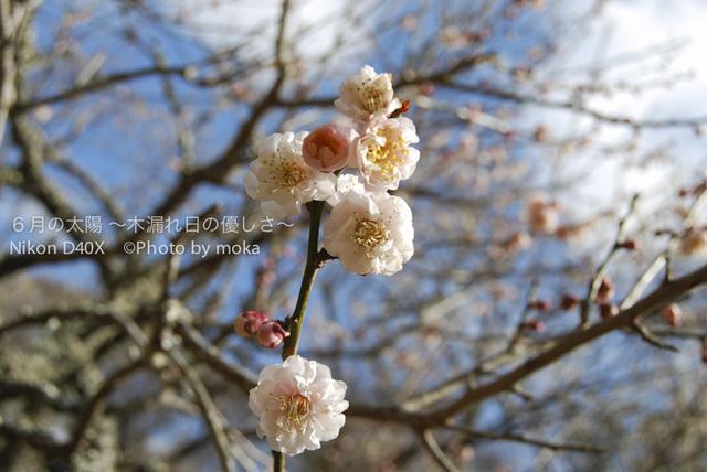 20100219-0220_nishiizu13.jpg