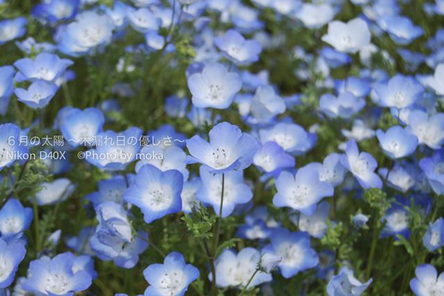 20100515-_hitachinaka01.jpg