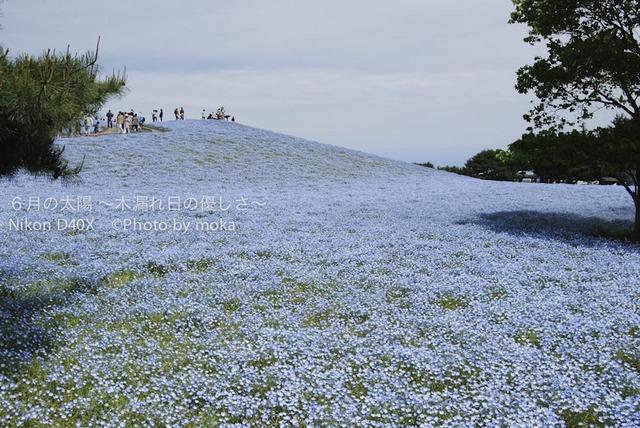 20100515-_hitachinaka02.jpg
