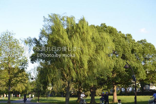 20101002_mizumoto-park05.jpg
