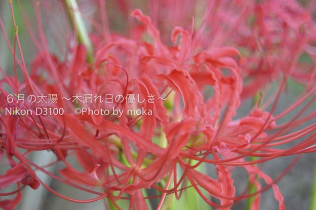20101002_mizumoto-park12.jpg