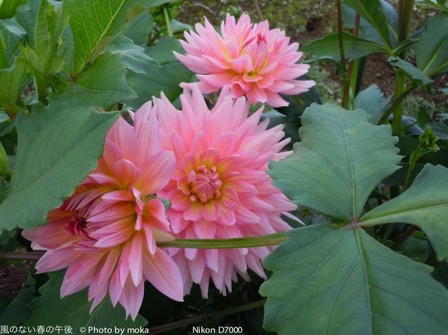 20110829-31_togakushi-adumino188.jpg