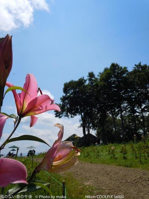 20110829-31_togakushi-adumino263.jpg