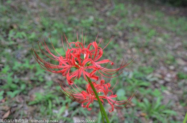 20110923_shouwakinenpark03.jpg