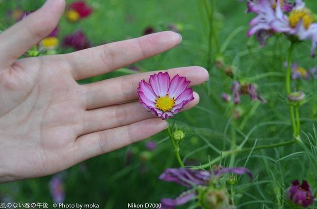 20110923_shouwakinenpark60.jpg