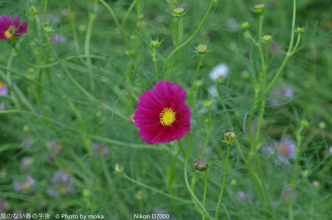 20110923_shouwakinenpark61.jpg