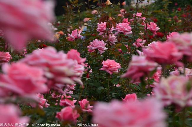 20111030_jindaiji061.jpg