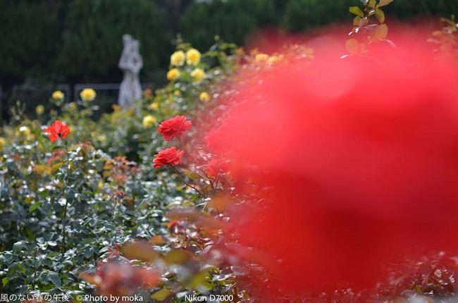 20111030_jindaiji091.jpg