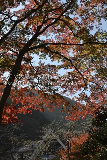 20111124_takaosan03.jpg
