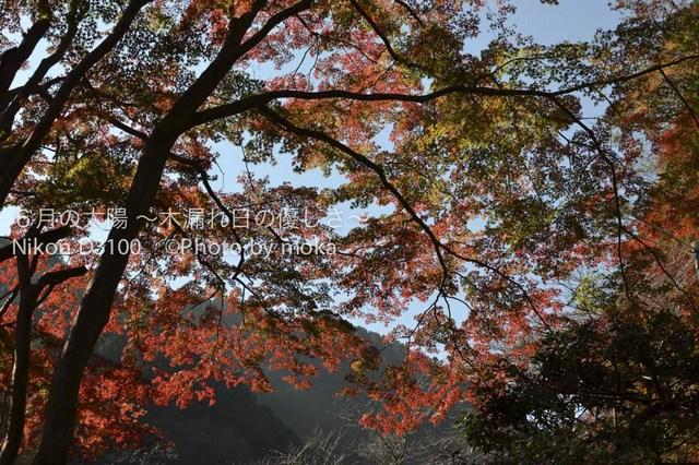 20111124_takaosan04.jpg