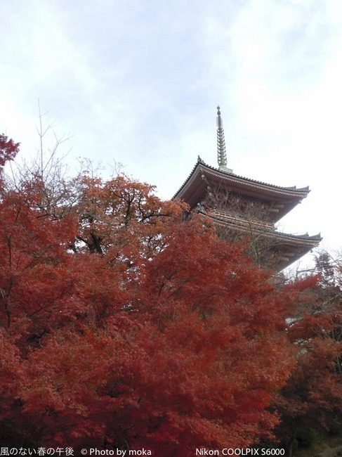 20111127-29_kyoto175.jpg