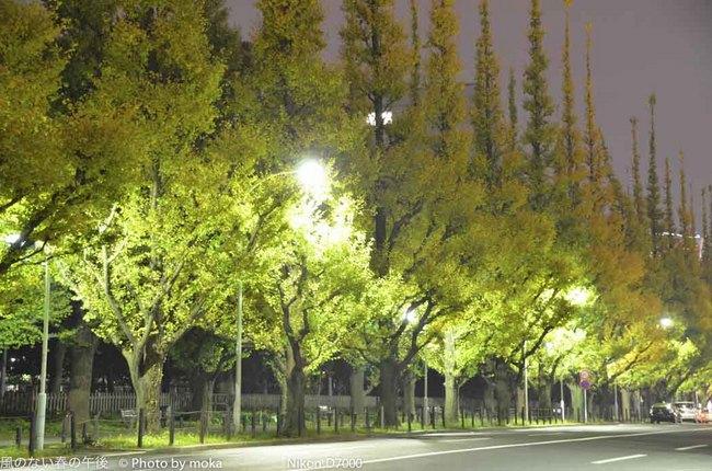 20111128_gaienmae09.jpg