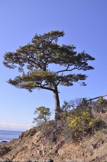 20111224_yokoshuka45.jpg