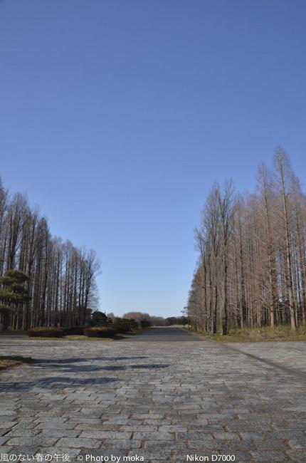 20120202_mizumoto-park13.jpg