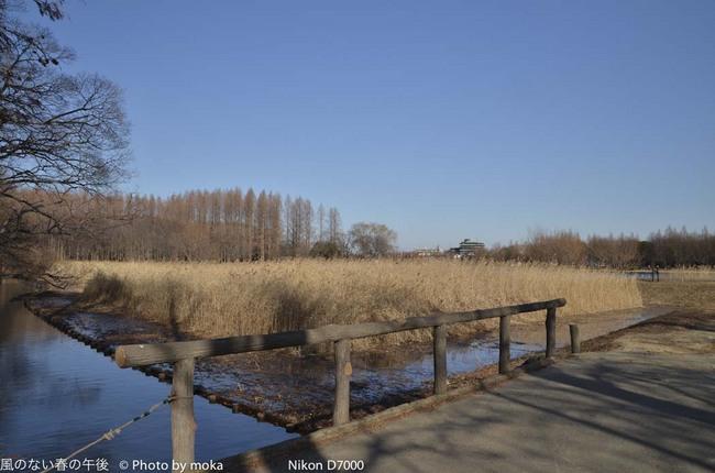 20120202_mizumoto-park59.jpg