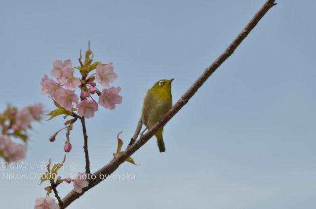 20120326_kasairinkai-park07.jpg