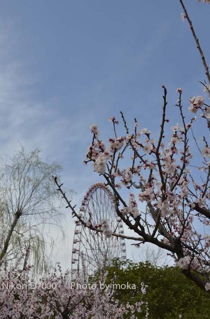 20120326_kasairinkai-park11.jpg