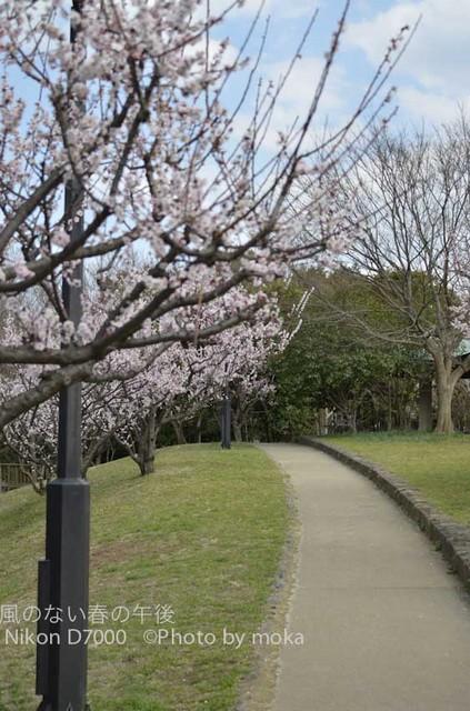 20120326_kasairinkai-park18.jpg
