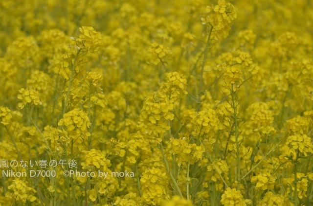 20120326_kasairinkai-park29.jpg