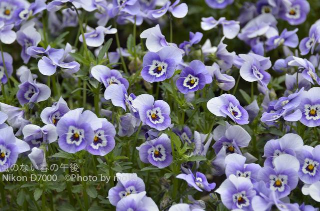 20120425_jindaiji09.jpg