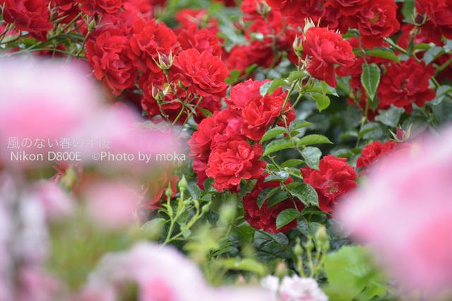 20120525_oujikamiya11.jpg
