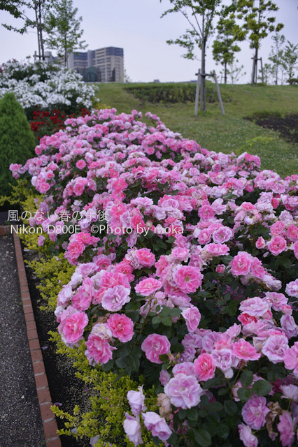 20120525_oujikamiya18.jpg
