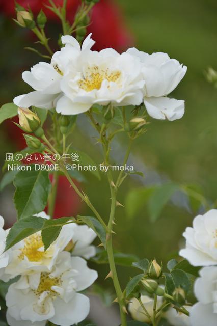 20120530_jindaiji021.jpg
