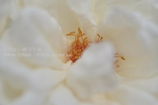20120530_jindaiji079.jpg