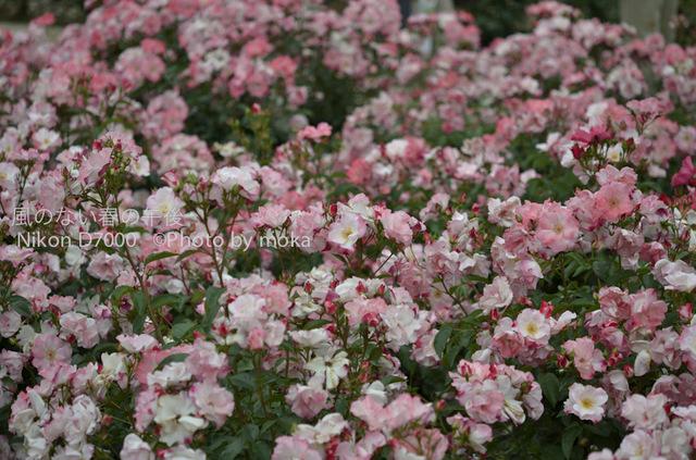 20120530_jindaiji099.jpg