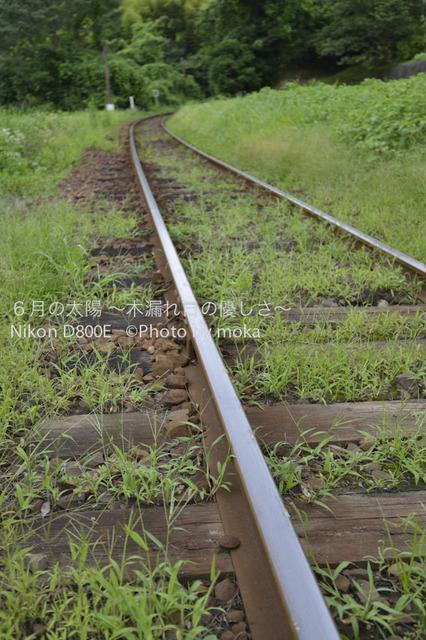 20120723_youroukeikoku11.jpg