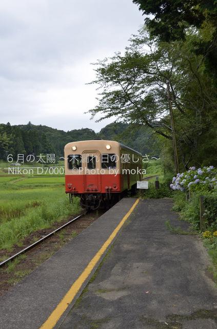 20120723_youroukeikoku61.jpg