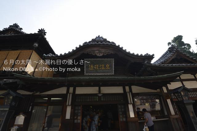 20120920-21_dogo01.jpg
