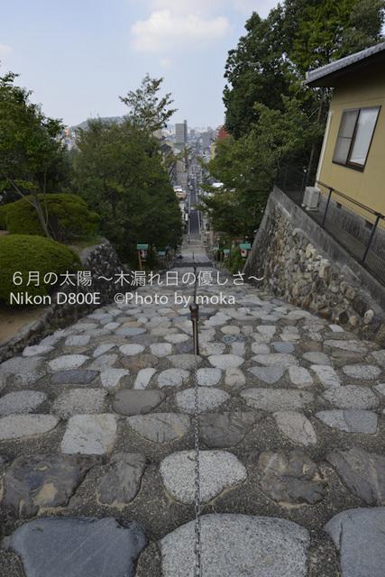 20120920-21_dogo48.jpg