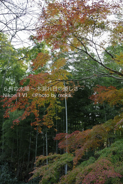 20121202_nagatoro43.jpg
