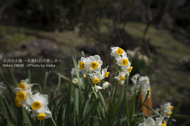 20130222-23_izu174.jpg