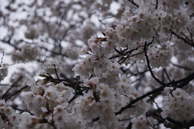 20130327_jindaiji069.jpg
