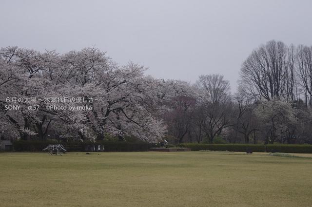 20130327_jindaiji101.jpg