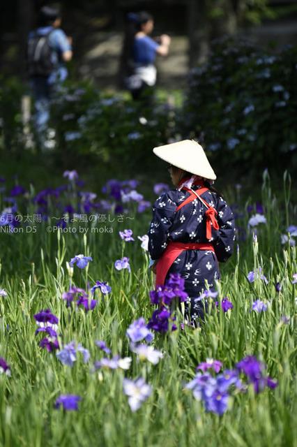 20160611_mizumoto-park26.jpg