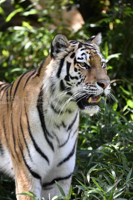 20160623_tama-zoo134.jpg
