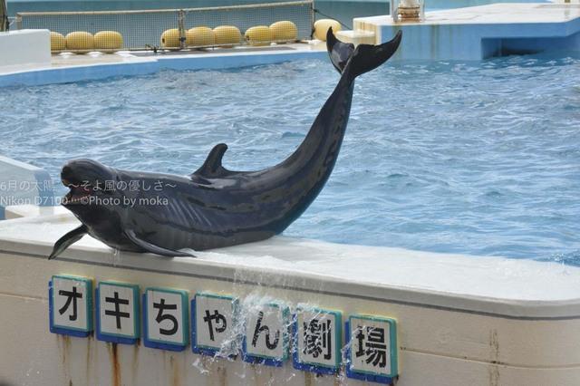 20171021-23_okinawa189.jpg