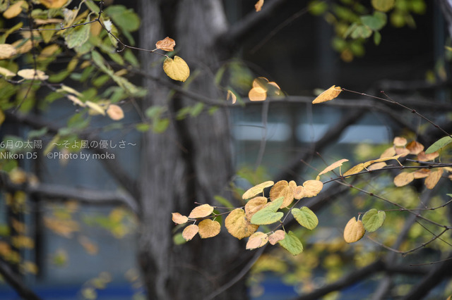 20171122_shinagawa150.jpg