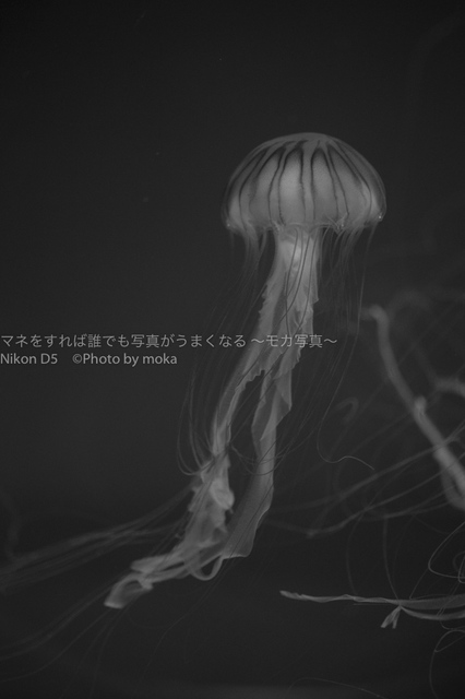20181025_suidasuizokukan042.jpg