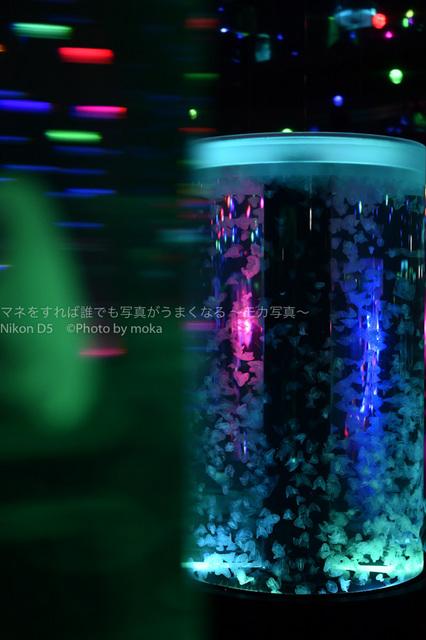 20181229_shinagawa36.jpg